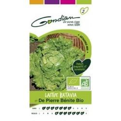 Graines de Laitue Batavia de Pierre Bénite Bio
