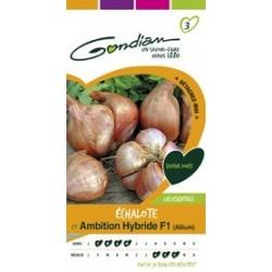 Graines d'Echalote Ambition hybride F1 (Allium)