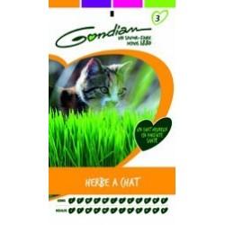 Graines d'Herbe à chat